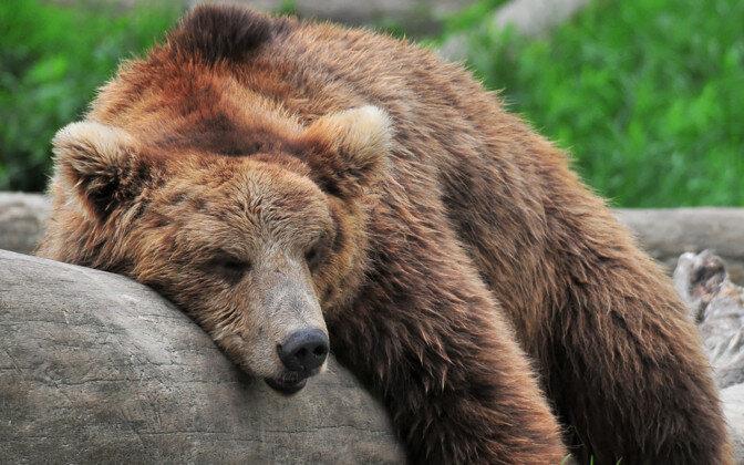Eesti karude elu on meelakkumisest kaugel